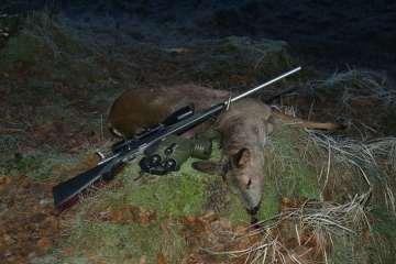 Valg af fladtskydende riffel til bukkejagt