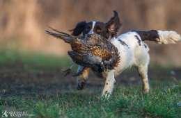 Jagthundetyper og racer