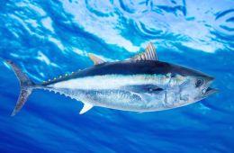 Bluefinn