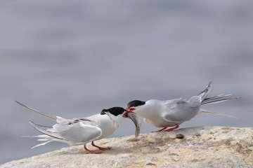 Ternet mole i Esbjerg