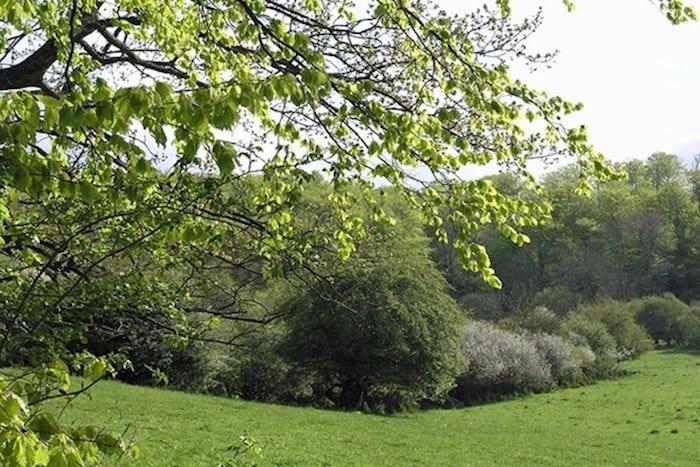 De nye skove er et rekreativt skatkammer
