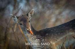 Nye forslag vedr. fodring af hjortevildt i støbeskeen