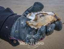 Giftige alger fundet i danske østers og muslinger