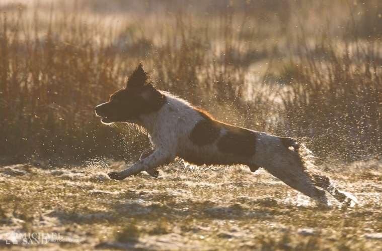 Flåt på hunde kan også tygges væk