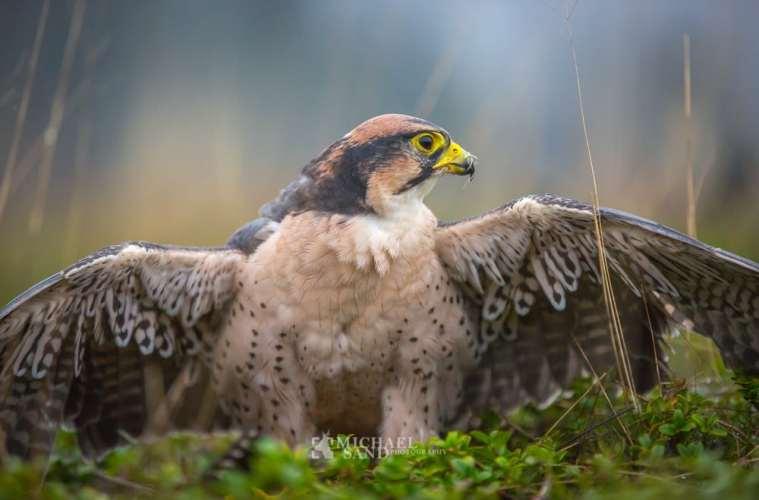 Opgør med byttehandler i dansk jagtpolitik