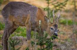 Ny film om vildtskader i skoven