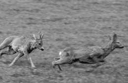 Det mener vi om meningstyranni og faglig begrundet jagtpolitik