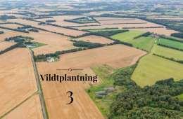 Vildtplantning 3: Design af remiser og hegn