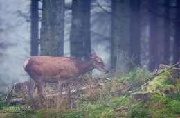 Skoleelever oplever jagt i National Park Thy