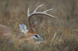 Nyjæger på 7 år nedlægger hjort