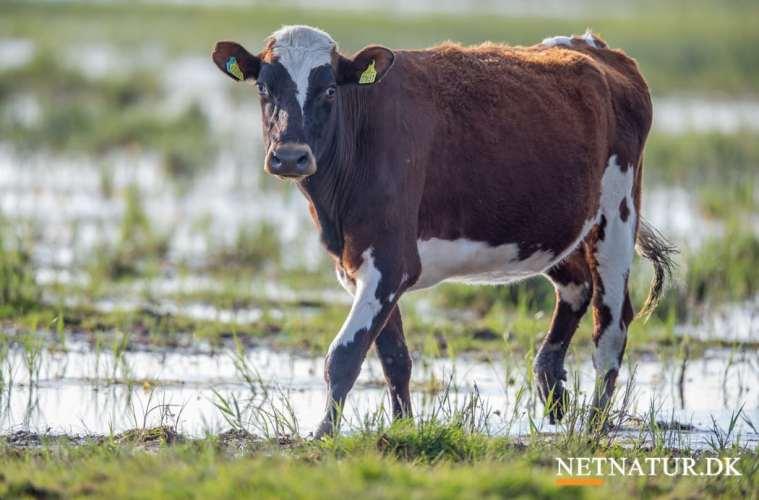 Landmænd får naturpleje på skoleskemaet
