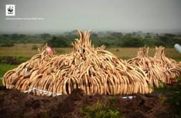 Tanzania: 12 års fængsel til berygtet elfenbenssmugler