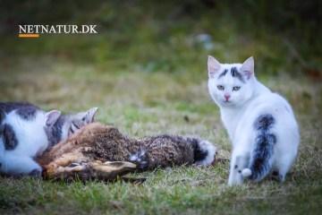Viden om: Hvad siger loven om katte
