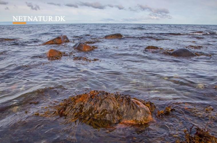 Nordsjælland: Ny nationalpark vokser med 83 lodsejere