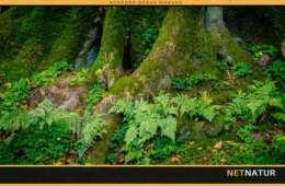 DN: Det haster med vildere skove