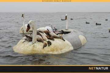 Ænder, gæs og svaner boomer i vigtige fjordområder