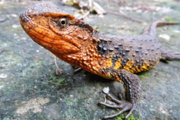 WWF-rapport: 115 nye arter opdaget i Asien