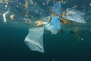 Plastik dræber flere havskildpadder