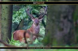 Fire millioner til mere viden om jagt og vildt i Danmark