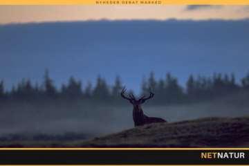 Jægere gør flere dyr nataktive