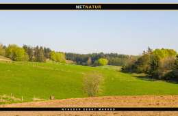 Engflået breder sig kraftigt i Nordtyskland