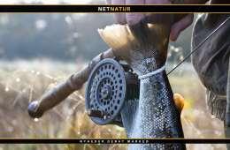 Søhåndbogen - stor digital guide til flere fisk og bedre fiskeri
