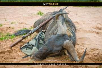 Namibia overvejer forbud mod brag af jagtbilleder på sociale medier