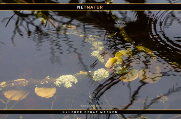 Den Danske Naturfond støtter 15 nye projekter