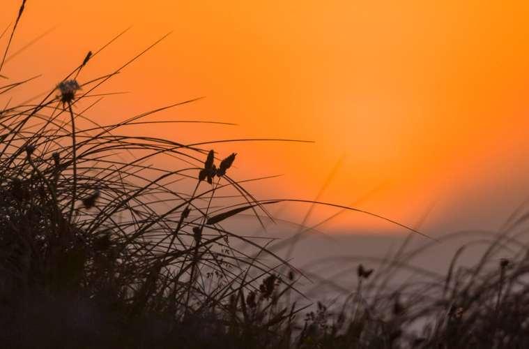 Tisvilde Hegn topper som hjemsted for truede arter