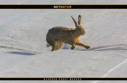 DN søger støtte til redning af truede danske arter
