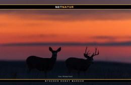 Jagt i USA - muligheder og faldgrubber