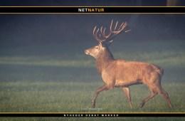 Jagtfilm viser 40 skud på fem minutter
