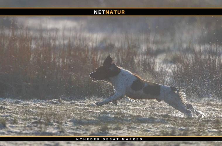 Viden om: Med hunden i naturen