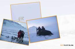 Dansk eventyrer oplever historisk vingesus i det iskolde Canada