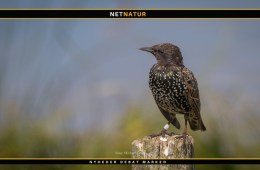 Den danske fuglebestand større end for 200 år siden
