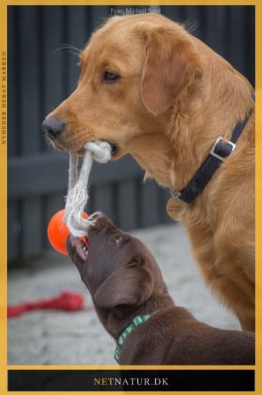 Hund og leg