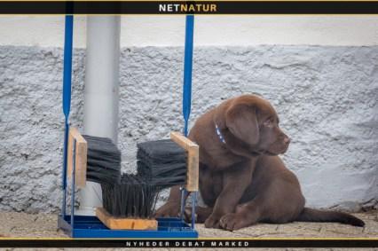 Støvlerenser og hund