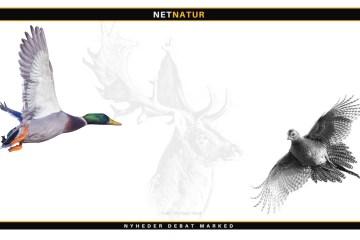 Jagttider og jagtetik