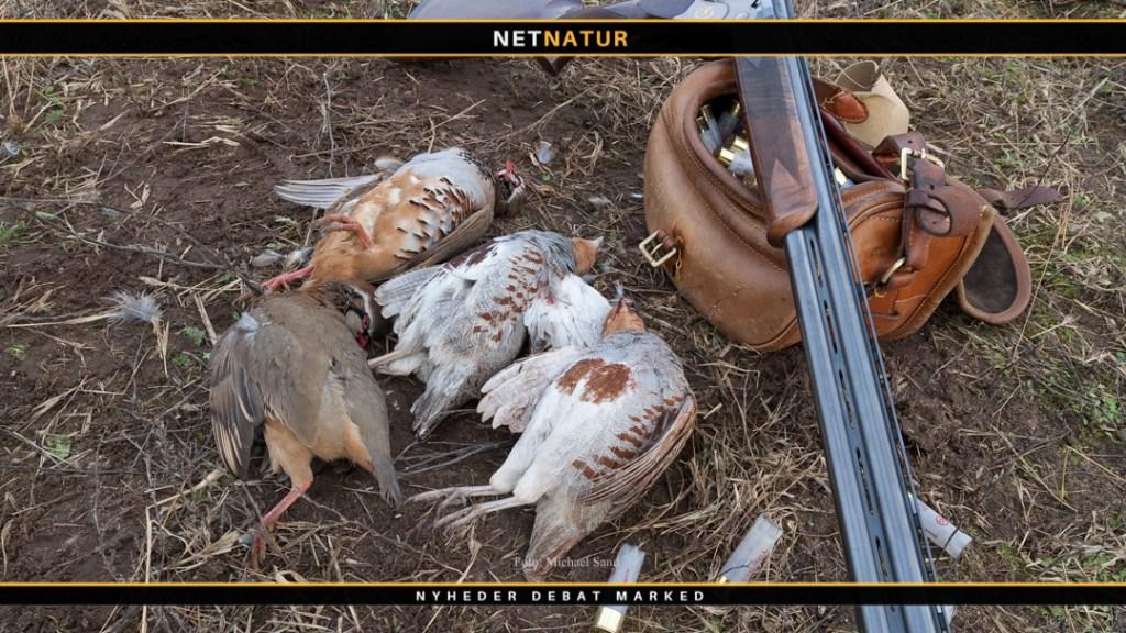 DOF: Udsatte fugle faunaforurener