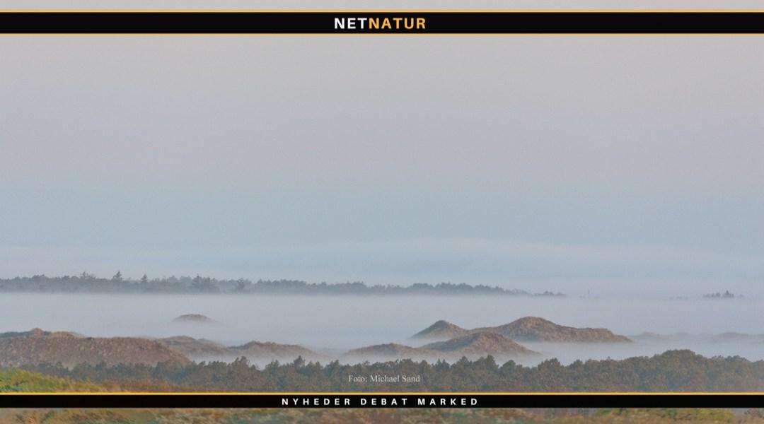 bevaringsstatus for naturtyper og arter
