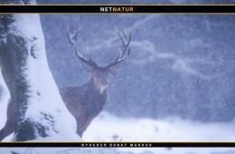 Lea Wermelin om jagt
