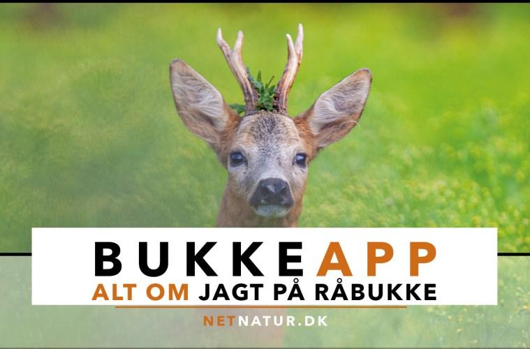 BukkeApp fra Netnatur