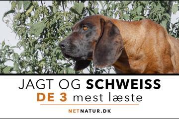 Schweiss - jagt og trafik
