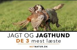 Hund og Netnatur