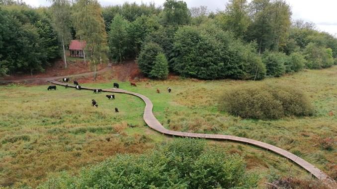 Landbrugsjord bliver våd og vild på Bornholm