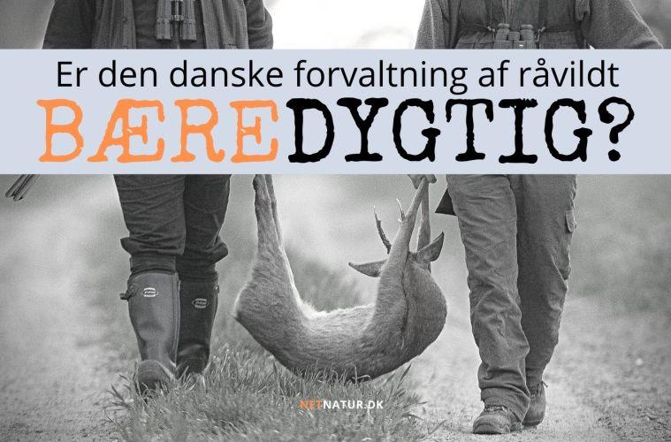 Bæredygtig jagt på råvildt