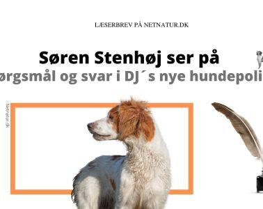 Søren Stenhøj