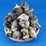 アカニシ貝(ニシ貝)SS 2kg