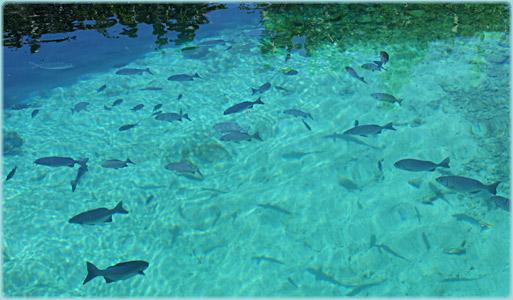 Caleta Buena in Zapata Cuba  Diving and Snorkeling Spot
