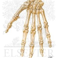 Wrist And Hand Unlabeled Diagram Usb Wiring Power Bones
